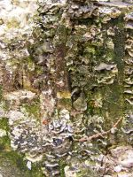 Decayed Fungus Patch 1 by OsorrisStock