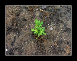 Growing - 01 by DxBGirLy