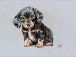 Small puppy by kkcooly