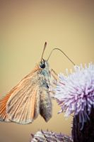 Little Creatures 093 by Frank-Beer