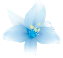 Beautiful Flowers PNG by HanaBell1