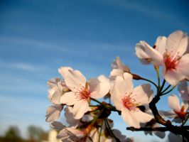 Blossom2 by luvBEX