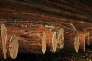 How to Store your Logs by HoremWeb