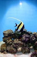 Angel Fish by unessential