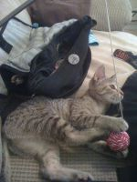 Kitten Playing With Ball by Cerestes-Stock