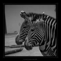 striped by donk00085