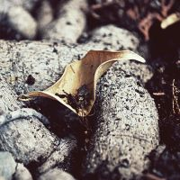 . Abandoned leaf 1 by tgphotographer