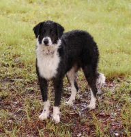 Wet Dog 2 by SalsolaStock
