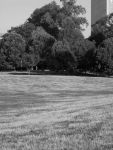 Dying Grass, Prospect Park 5 by icompton01