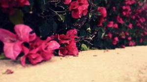 Red Flowers by Del-Korey