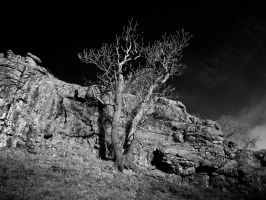 Tree. Rock. Shadow by GaryTaffinder