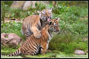 Sibling love by AF--Photography