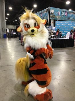 .:A Wild Arcanine Appeared!:. by XenomorphicDragon