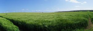 Panoramic of a field. by bm102938
