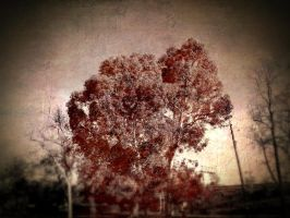 Tree in Redish by GeneLythgow