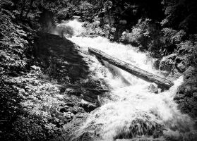 The log on Whiskeytown Falls by nathanspotts