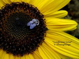 Sunflower Love by FicktionPhotography