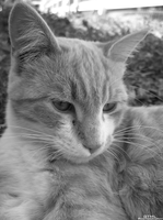 Devious Kitteh-Black and White by OneofakindKnight