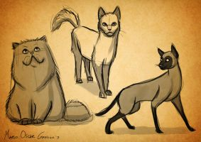 Cats Sketches by MarioOscarGabriele