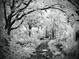 Infrared Path by blackismyheart90
