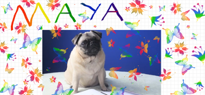 Maya by Ask-The-Pug