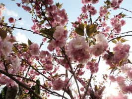 Flowering Tree stock by DoloresMinette