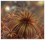 Bronze Anemones by bluefish3d