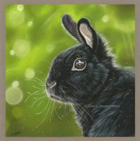 Little bunny with pastel pencils by Tinesdierportretten
