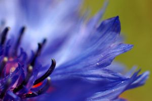 Untitled Macro of Flower by coopr