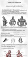 Human Torso Muscles Study by patty110692