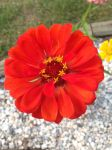 Flower of Red Power by Prodestiny