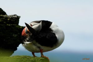 Puffin on the rocks 1 by Yoonett
