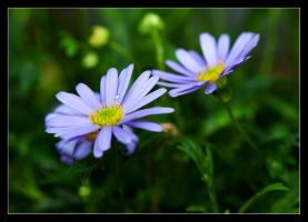 Miri's magic daisies by LordLJCornellPhotos