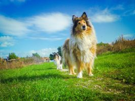 Dogs on my Way by hermio