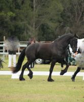 FR Trot side view engaged knee high by Chunga-Stock
