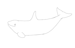 Free Female Orca Presenting Lineart by AnoOrca