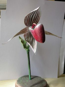 Rare Orchid by angotti81
