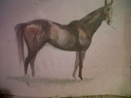 Racehorse by cxcow