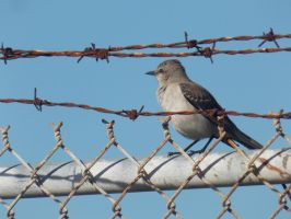 Bird on a Wired Fence by Bweeka