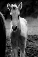 Foal paint by LauraL-Photography