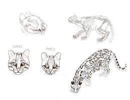 Ocelot anatomy by SundsArt