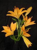 Orange Lillies by Heidi-V-Art
