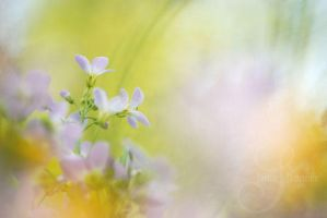 small bells by prismes
