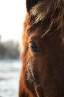 horse #4 by sys66