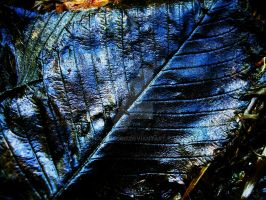 oil blue leaf by holymacro