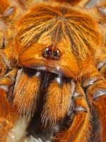 obt by darkminion2
