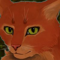 Firestar by aThousandPaws