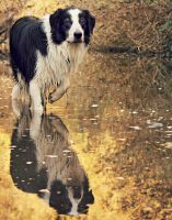 Reflections by micromeg
