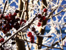 rowanberry1 by no-named-93