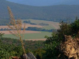 Looking off High Bluff Road 6 by Sphinx47